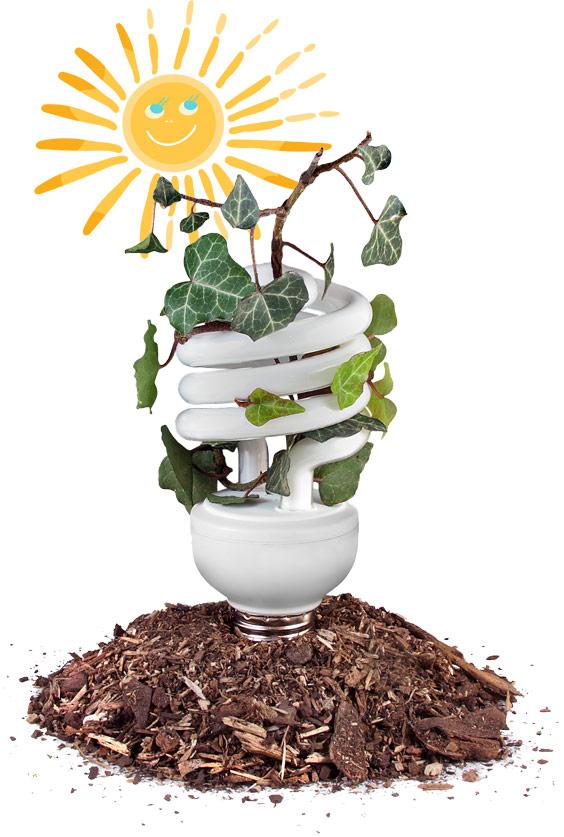 Glühbirne mit grüner Pflanze, als Symbol für nachhaltige Energie in Luxemburg, durch die Sonne.