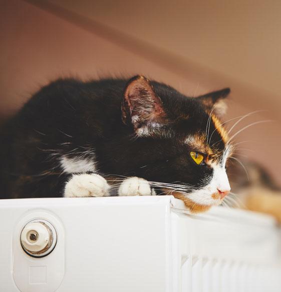 Zufriedene Katze liegt auf Heizkörper und geniesst die solarthermische Wärme von der Sonne.